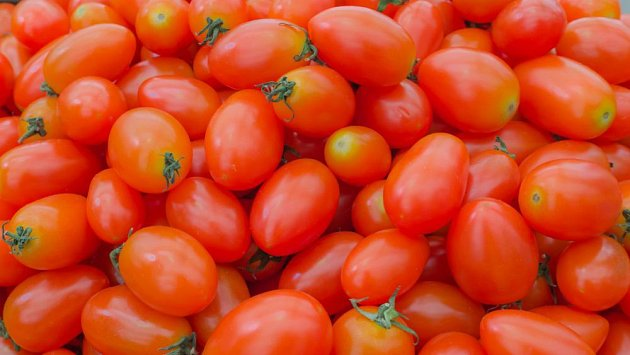 Zelený límec okolo stopky u zralých rajčat nemusí být závadou