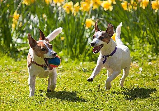 Hra s míčky psy baví a zdravě unaví