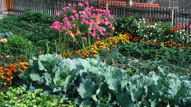 Stejně jako u lidí, některé druhy zeleniny si kvůli svým vlastnostem spolu lépe rozumějí