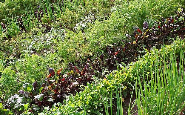 Chemické pesticidy narušují přirozený chod zahrady.