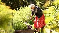 Tradiční součástí babičkovských zahrad jsou bylinkové záhony.