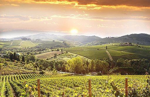 italská vinice v Toskánsku