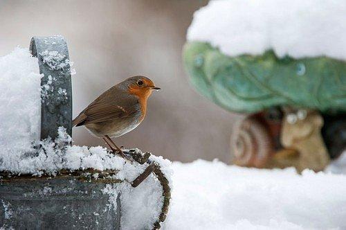 Jakmile udeří chladnější dny, budete od pravidelného chození s kropáčem po zahradě lehce osvobozeni.