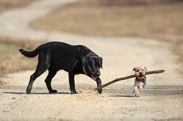 Psí plemena mohou být hodně rozdílná vzhledem i povahou.