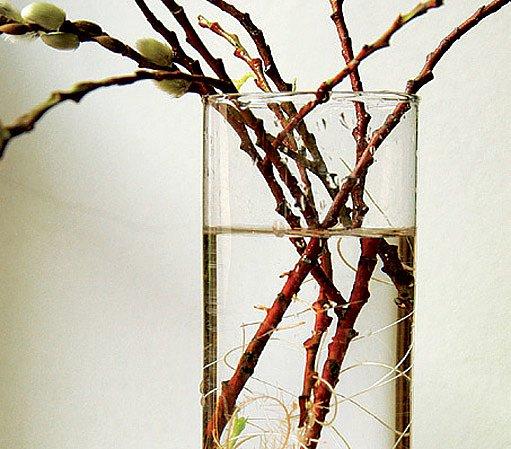 Některé řízky zakoření i ve sklenici s vodou