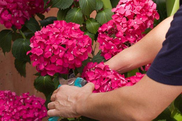Použijte zahradnické nůžky a střihněte těsně pod květem, na vrcholu stonku.