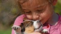 Štěně je pro dítě velký kamarád.