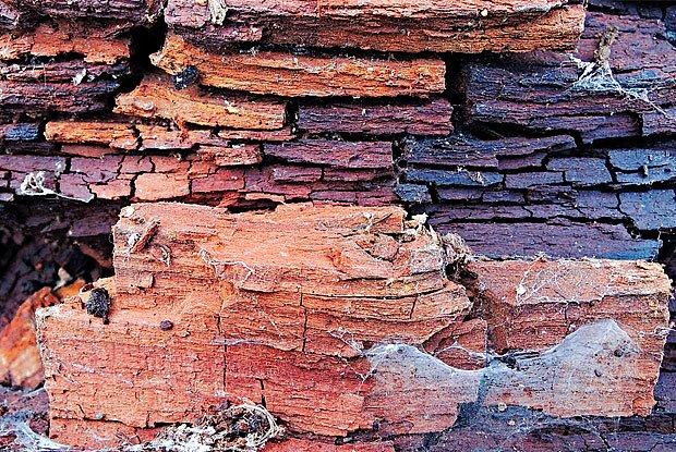 dřevo po útoku dřevomorky