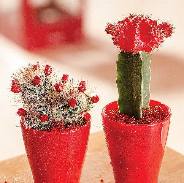 Miniaturní kaktusy