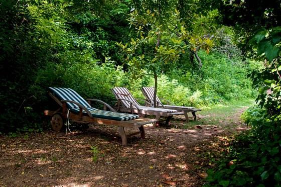 Chladivý stín stromů a keřů poskytne bezpečný odpočinek