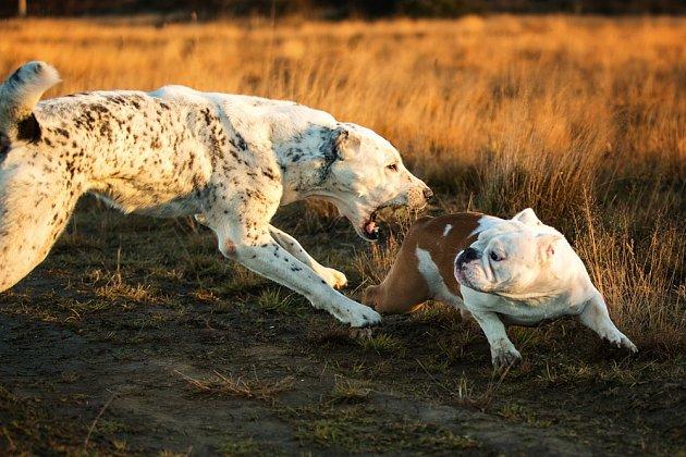 Někteří psi napadají jiné psy zdánlivě bez záminky.
