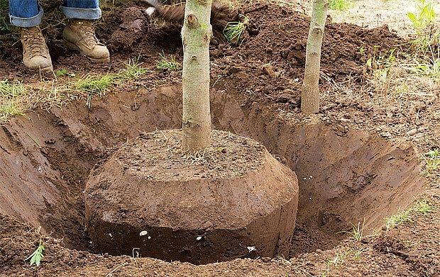 Nové místo pro zahradní dřeviny