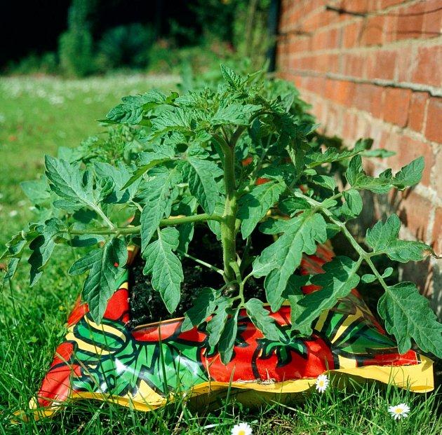 Pěstování rajčat v pytlích je ekologické