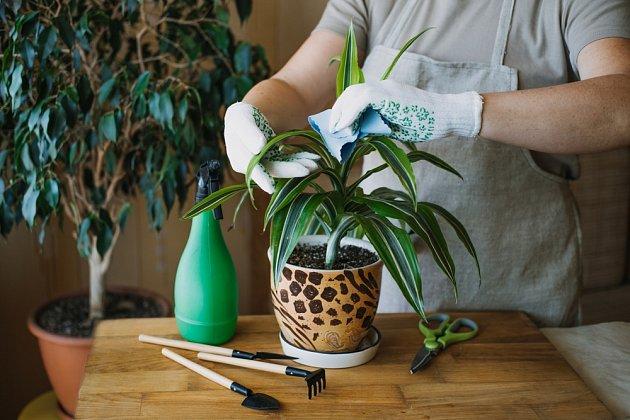 Listy rostlin po zimě dobře z obou stran utřete