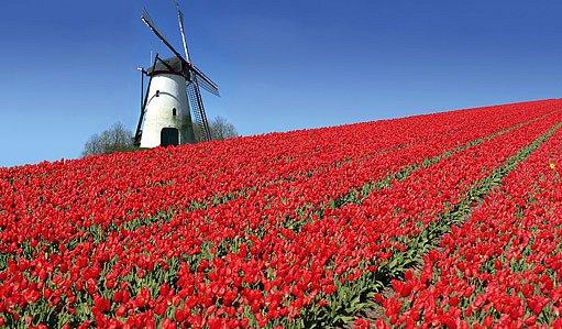 Holandsko - země tulipánů a větrných mlýnů