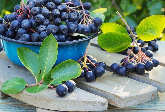 Plody aronie jsou mimořádně zdravé