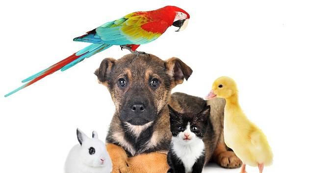 Které zvíře je pro vás to pravé?