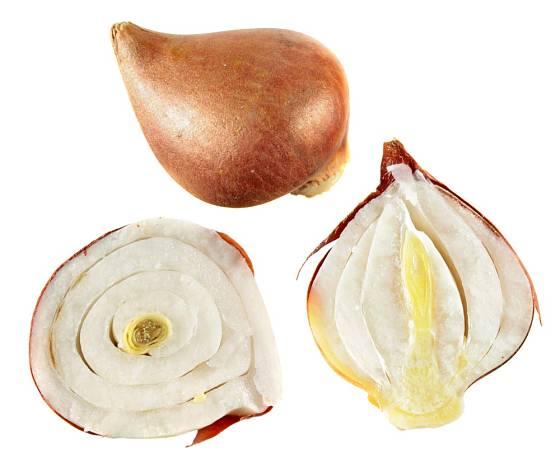 Řez cibulí tulipánu. Cibule se skládají ze 4-6 suknic.