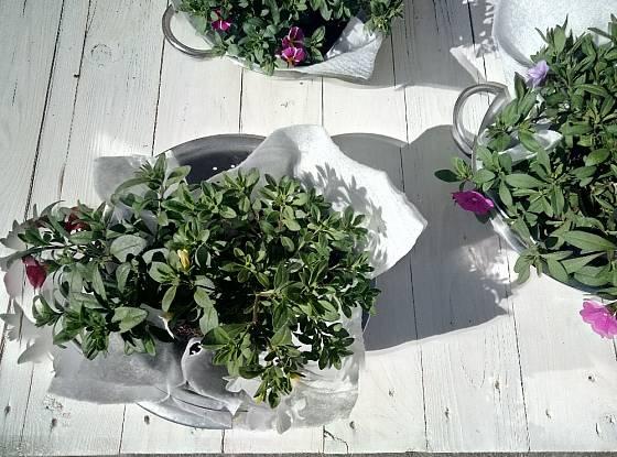 Na netkanou textilii vyklopíme rostliny z plastových květináčků.