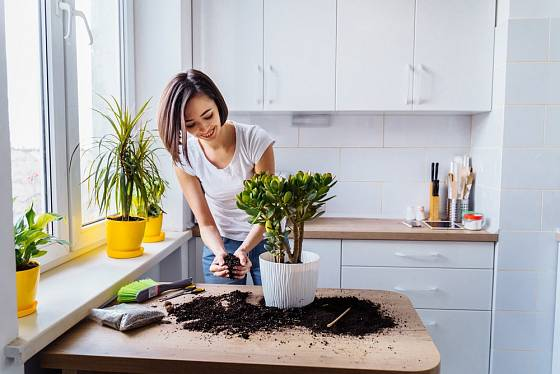 Každá milovnice pokojových rostlin uvítá osvědčené dobré rady na pěstování.