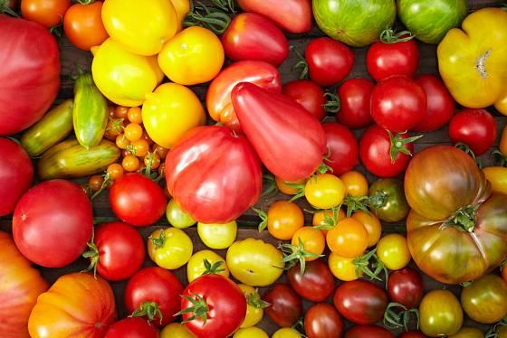 Výběr odrůd rajčat je nesmírně pestrý