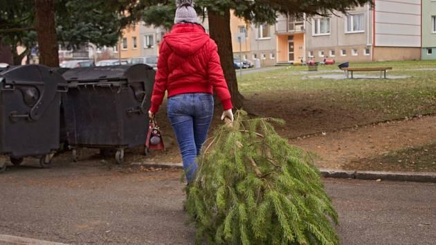 Odstrojený vánoční stromek patří ke kontejnerům na komunální odpad.