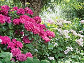 Nejkrásnější keře pro okrasnou zahradu