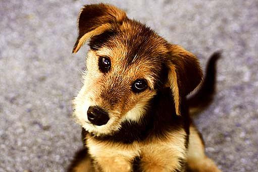 Pes z útulku