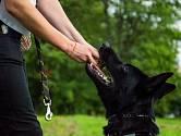 Mezi psy s nejsilnějším stiskem patří kromě pitbulů, německých ovčáků a holandských ovčáků také rotvajleři a molossové.