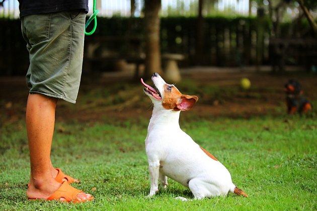 Ani u malých psích plemen bychom neměli podceňovat výchovu.