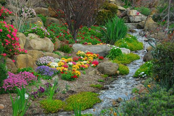 Okolí potoka můžeme osázet mnoha vlhkomilnými rostlinami.