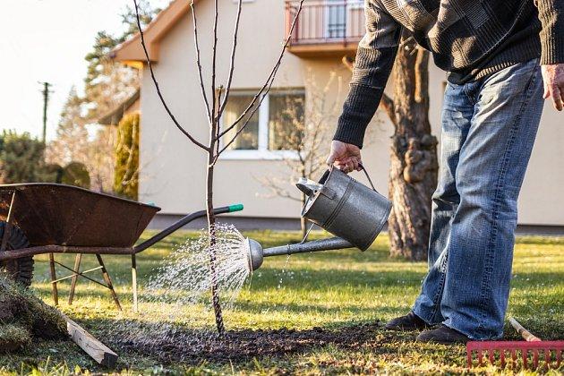 Pravidelná péče o mladé ovocné stromy je základ.