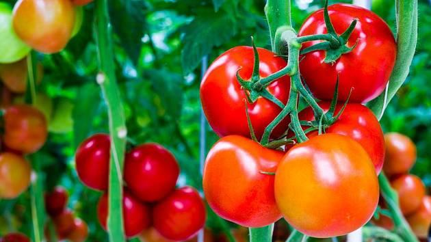 Hnojivo z chleba funguje na rajčata lépe než drahé chemické přípravky