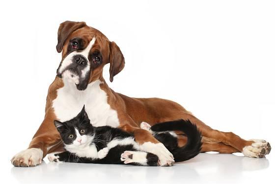 Pes a kočka v jednom domě? Nic neobvyklého!