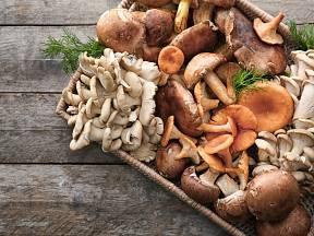 Sbíráme pouze houby, které bezpečně známe