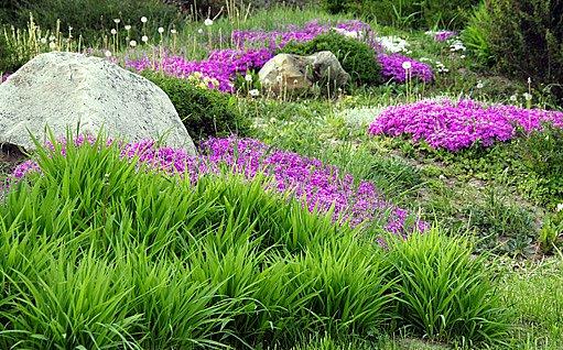 zahrada má tisíce variací