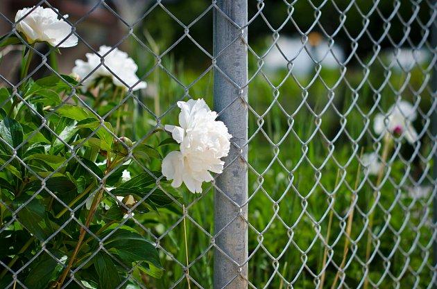 Výhodou drátěného plotu je jednoduchá výstavba i péče.