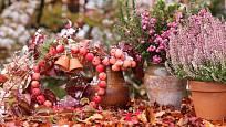 Otužilému vřesu nevadí ani první mráz a sníh, do podzimního aranžmá je ideální