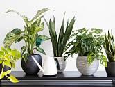 Některé pokojové rostliny mohou negativně ovlivnit naše vztahy s ostatními lidmi.