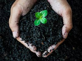 Víte, jak ovlivnit pH půdy?