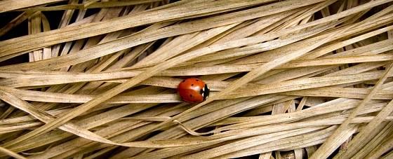 POrosty suchých trvalek i trávy jsou zimním hotelem nejen pro berušky