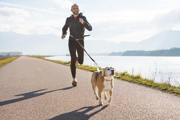 Při canicrossu je jeden nebo i více psů napojen lanem na běžce-vůdce.