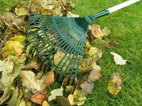 Podzimní hrabání listí.