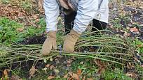 Nejen stromkovým růžím může pomoci ochrana vrstvou půdy