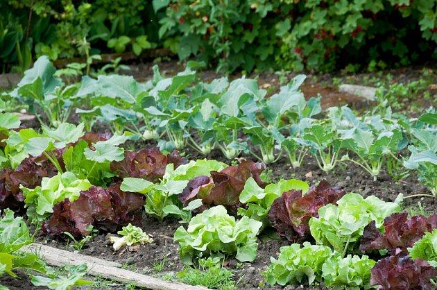 Kombinace salátů a kedluben dobře využije prostor