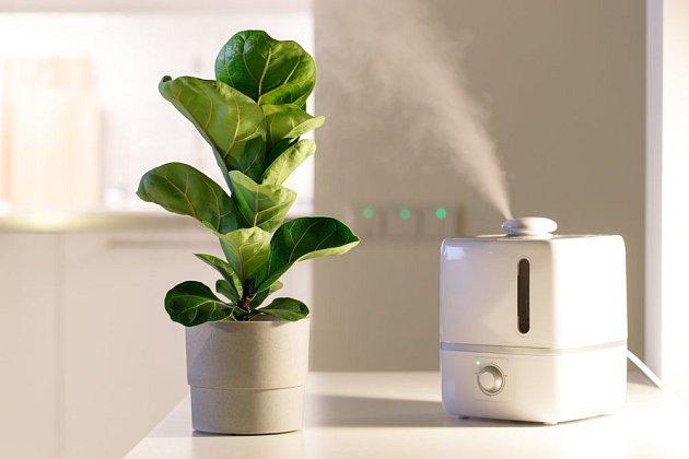 Velmi suchý vzduch můžeme upravit pomocí zvlhčovače. Prospějeme rostlinám i sobě