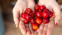 Plody tropické aceroly jsou velmi bohaté na vitamín C.