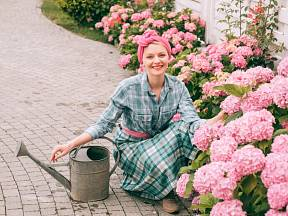 Čím v horku přihnojit květiny, aby nádherně kvetly