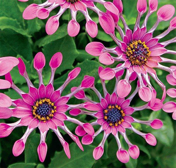 Nové květinové krásky na trhu