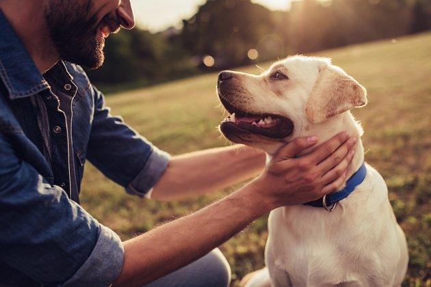 Labradorský retrívr má skvělé schopnosti pro to, aby se stal psím terapeutem.